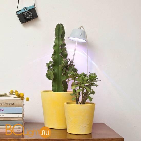 Подвесной светильник Linea Light Chlorophyll Bulbo 8012