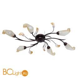 Потолочная люстра MW-Light Восторг 242017006