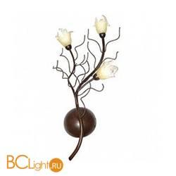 Бра N-Light Xera 1444/3W