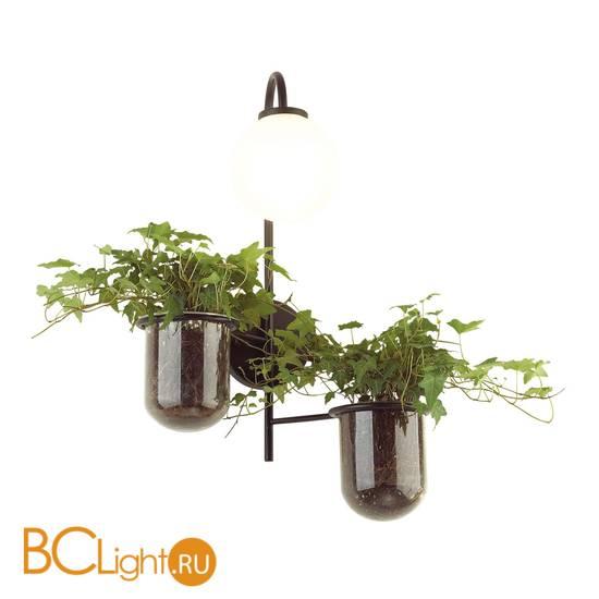Бра Odeon Light Flower 4681/1W
