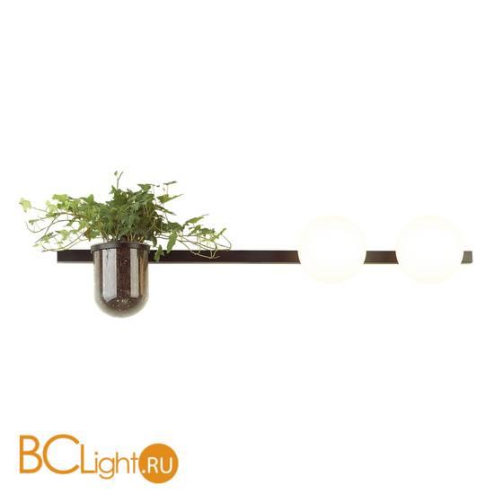 Настенный светильник Odeon Light Flower 4681/2W